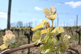 propriété-vinicole-vente-remere